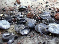 Photograph of lead pellets.