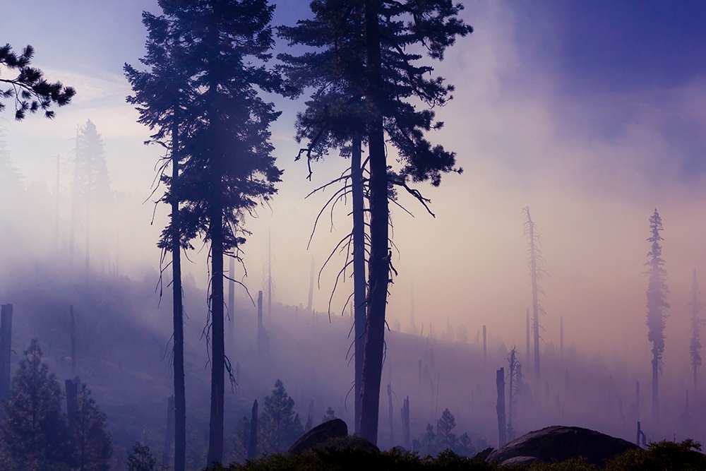 Photograph of a forested mountainside after a wildfire seen through thick smoke.